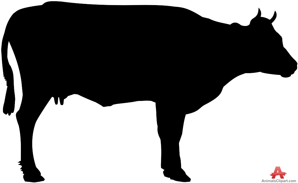 Picture Of A Cow