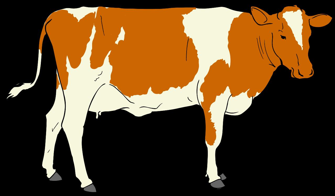 1280x748 Cow Clipart