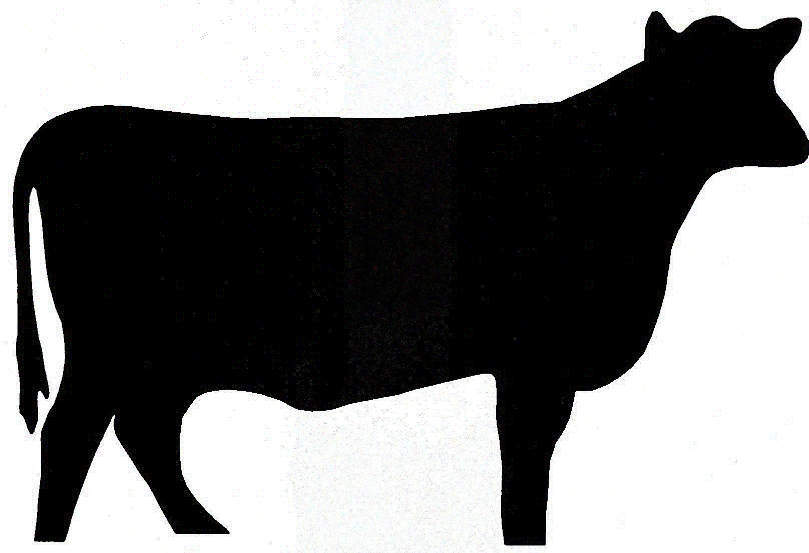 1616x1104 Cow Clipart Heifer