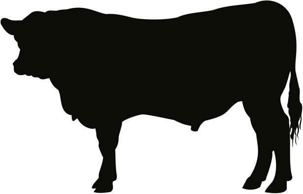 615x393 Black Angus Cow Clipart