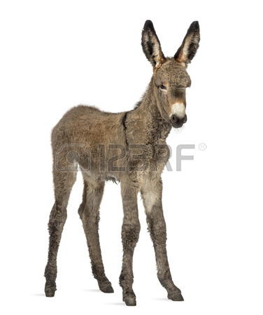 376x450 Provence Donkey Images Amp Stock Pictures. Royalty Free Provence