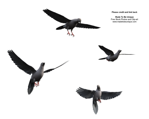 Picture Of A Flying Bird | Free download best Picture Of A Flying