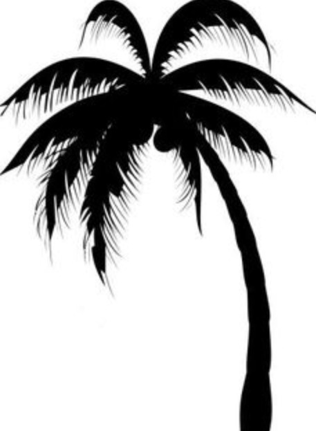 Picture Of A Palm Tree
