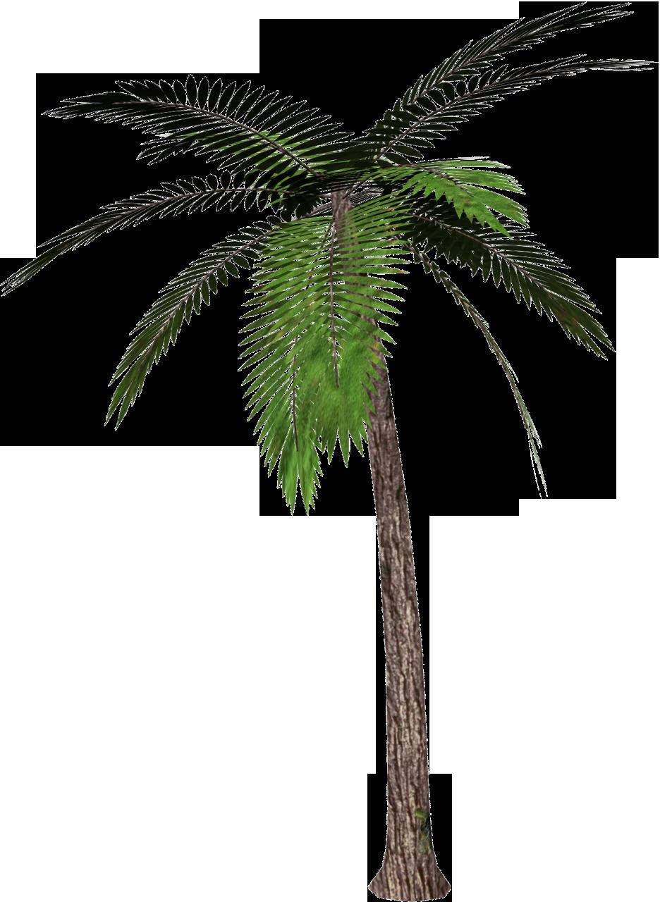 936x1280 Free Palm Tree Clipart