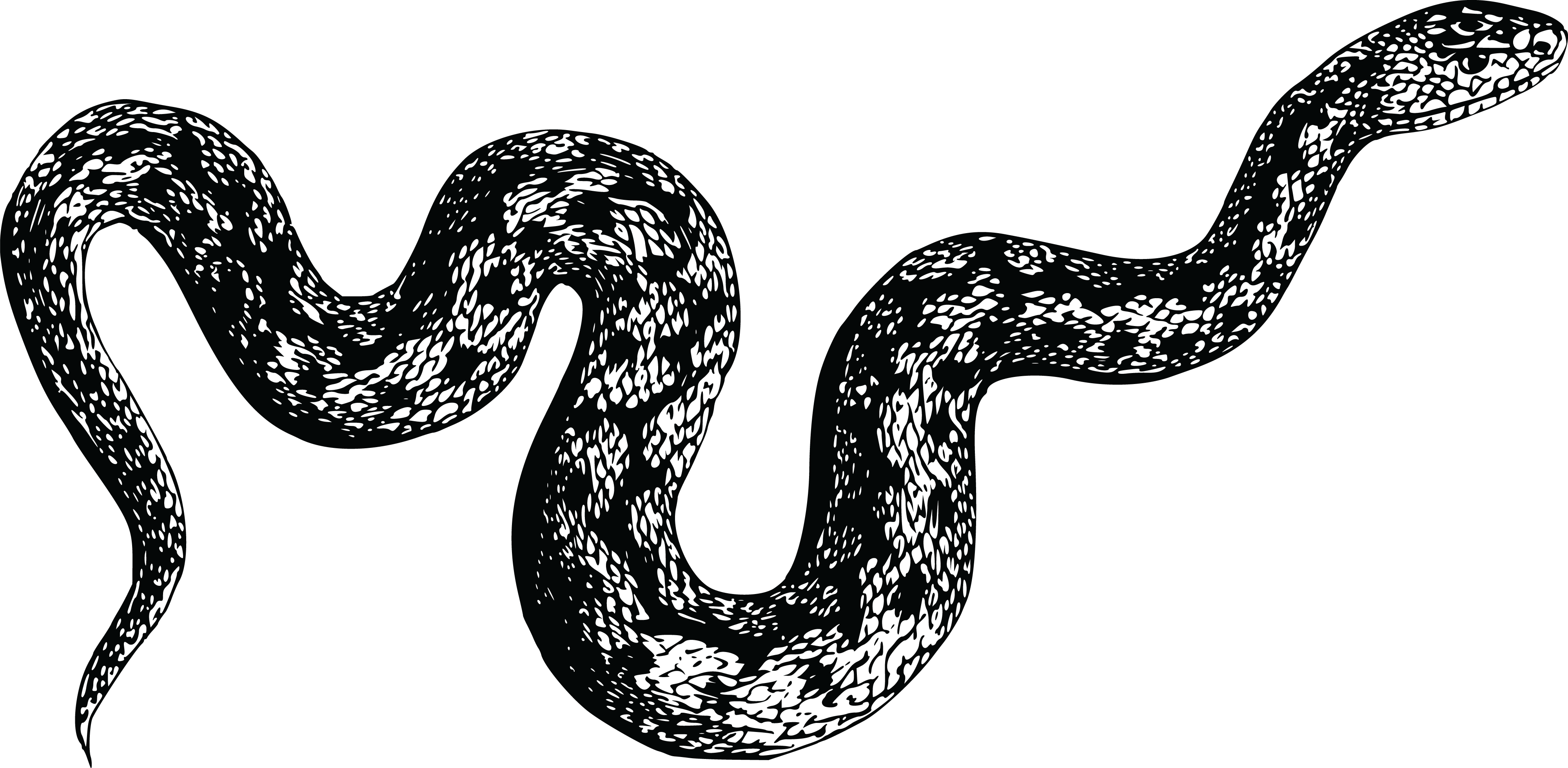 4000x1960 Free Clipart Of A Snake