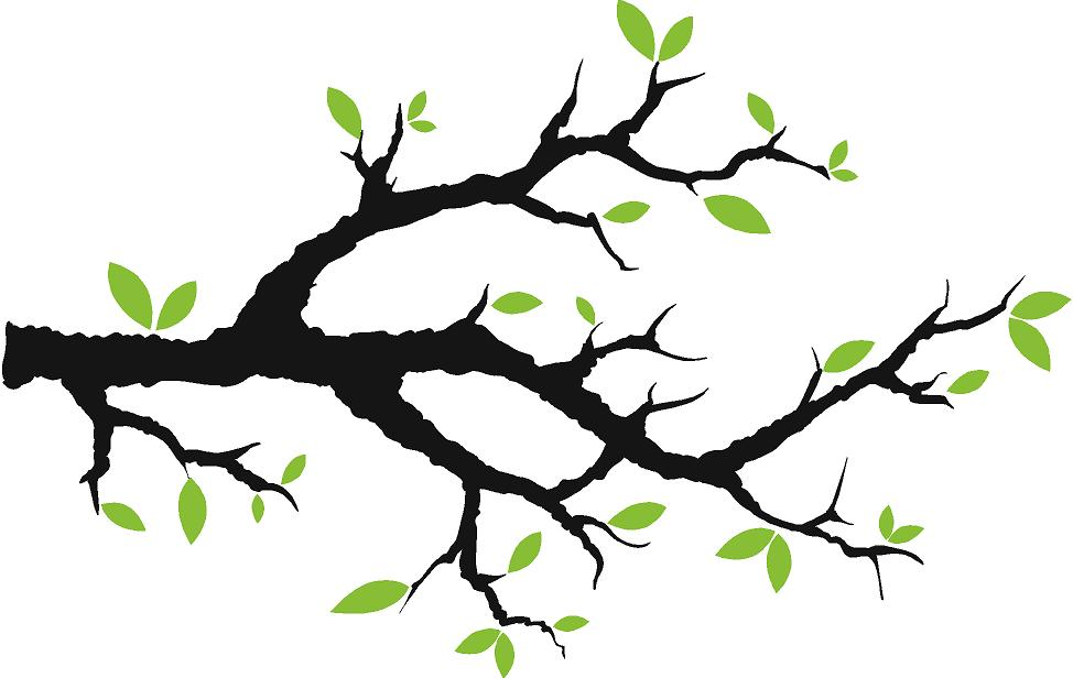 974x616 Branch Clipart Tree Limb