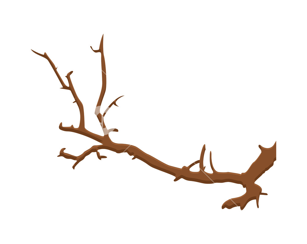 1000x794 Dry Tree Branches Designs Royalty Free Stock Image
