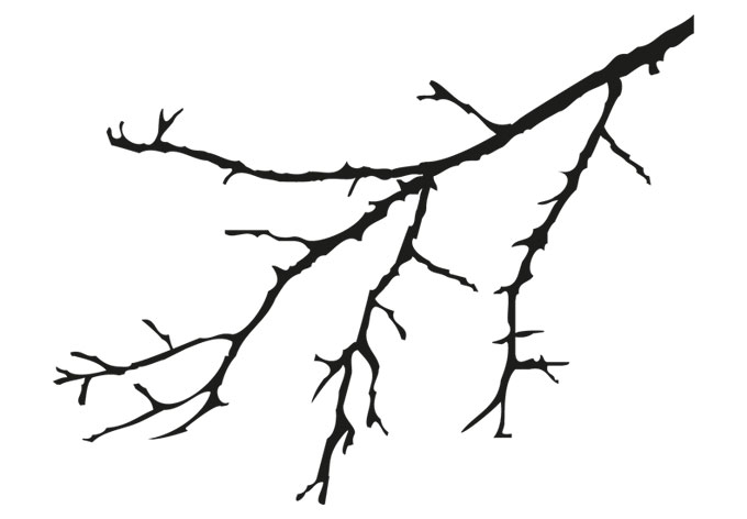 680x472 Tree Branch 2 Color Wall Decal
