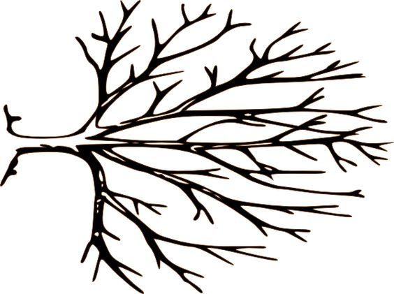 564x421 Tree Branch Black And White Clipart