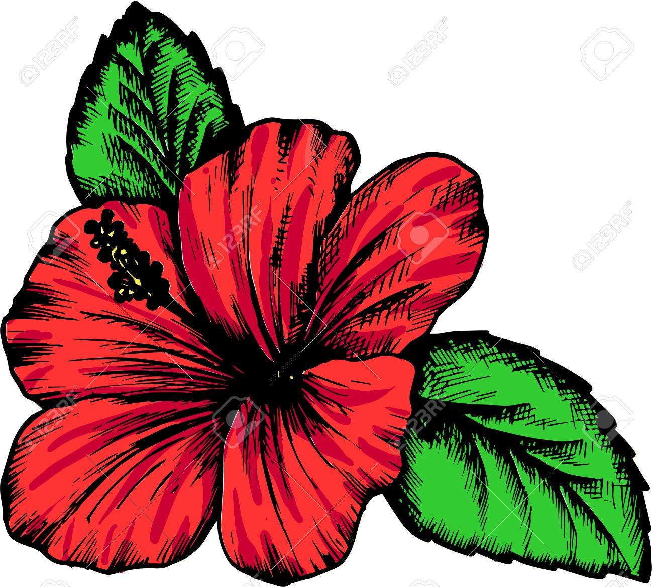 1300x1169 Hibiscus Flower, Hand Drawn Vintage Vector Illustration Royalty