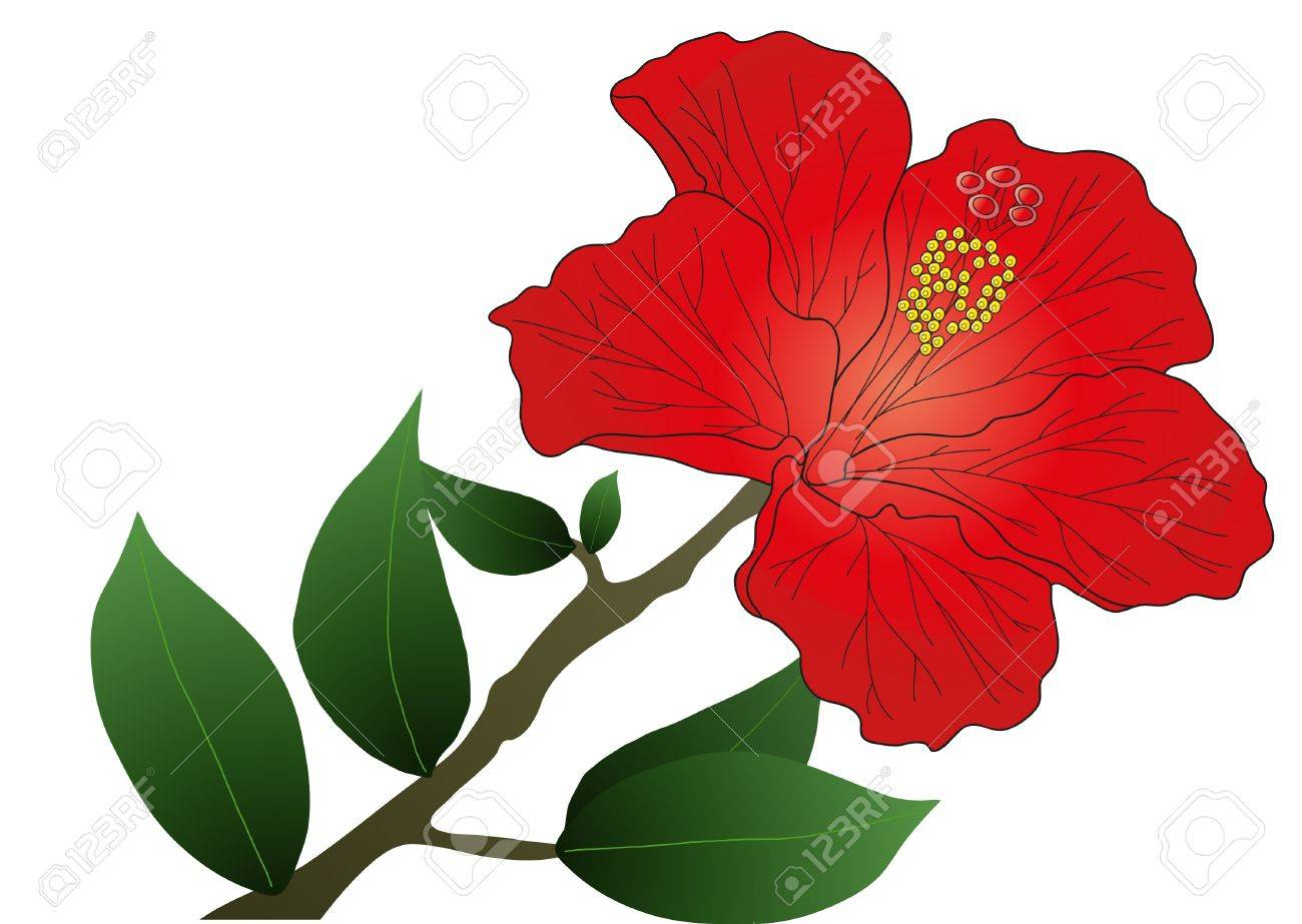 1300x923 Hibiscus Flower Leaves Fiori Idea Immagine