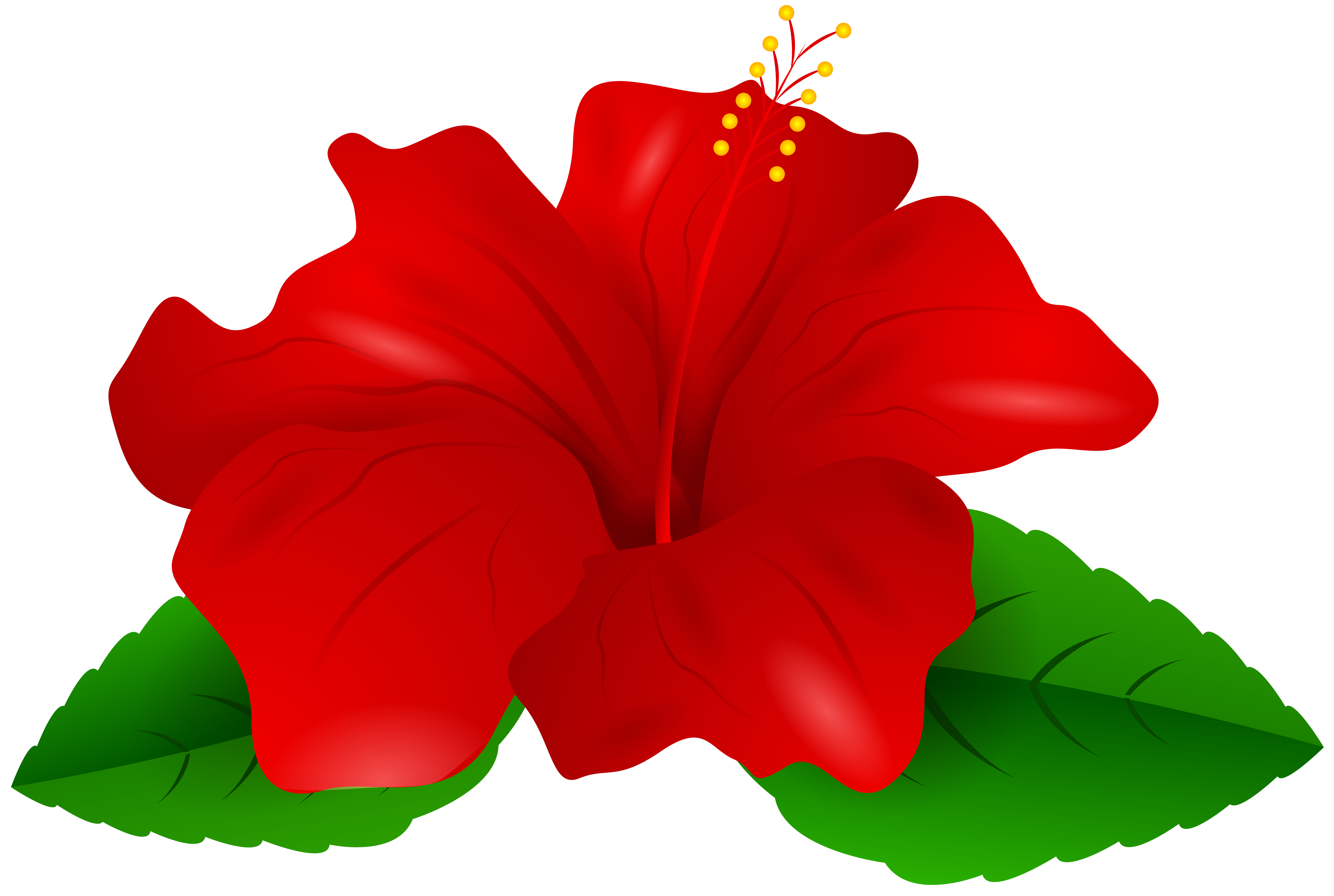 Picture Of Hibiscus Flower Free Download Best Picture Of Hibiscus