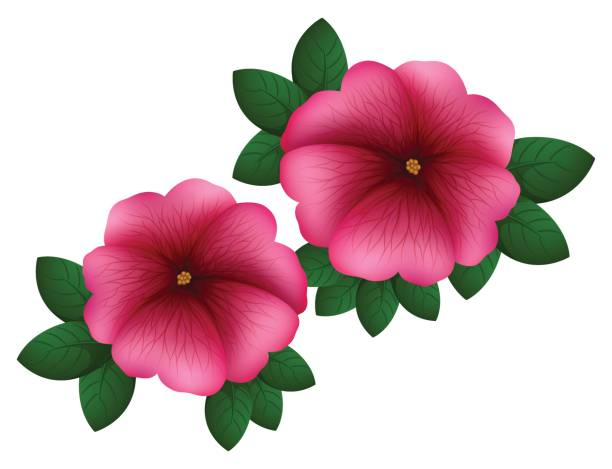 612x469 Petunia Clipart Hibiscus Flower