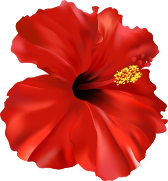 340x367 Red Flower Hibiscus Flower Clipart Clipart Hello