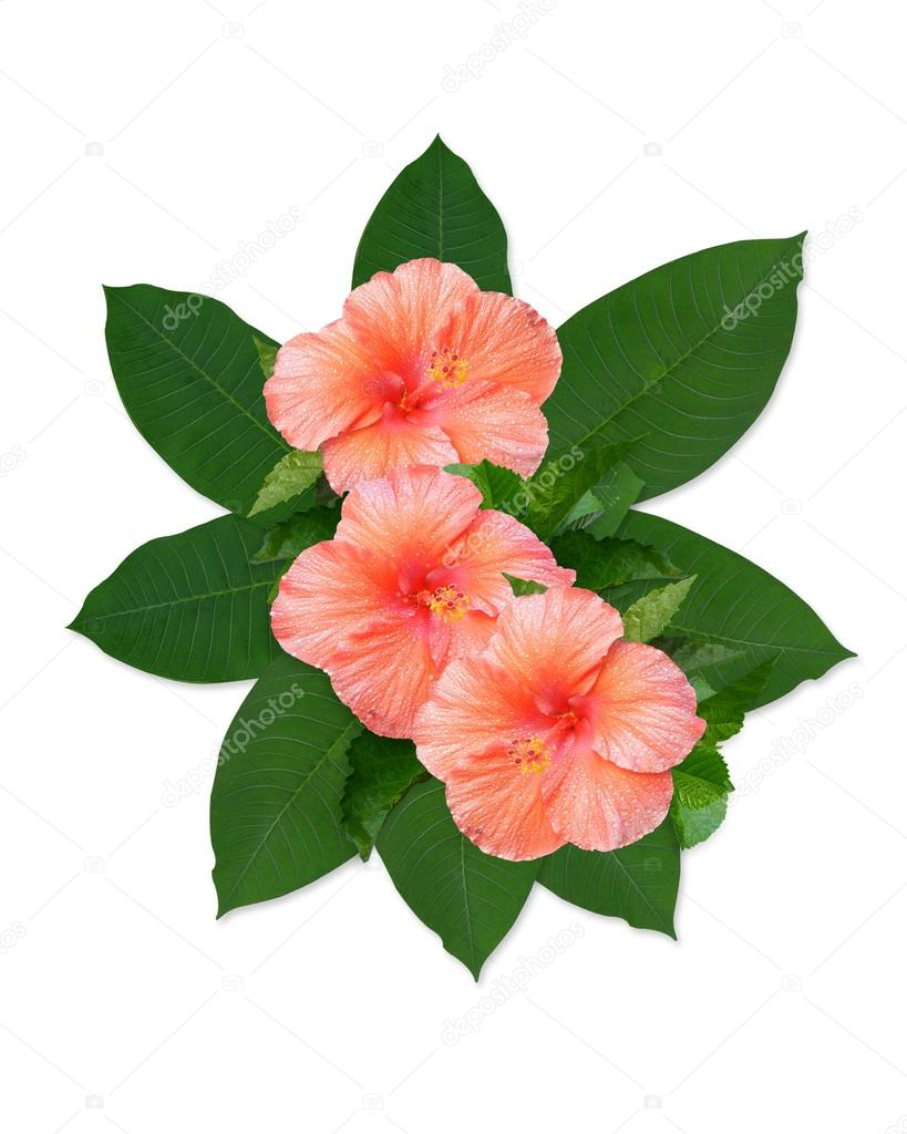 819x1024 Tropical Flowers Hibiscus And Leaves Stock Photo Irisangel