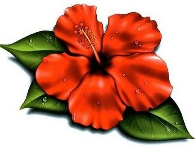 400x301 Cartoon Hibiscus Flower