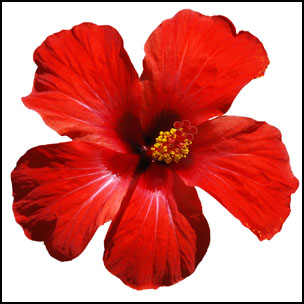 304x304 Flower