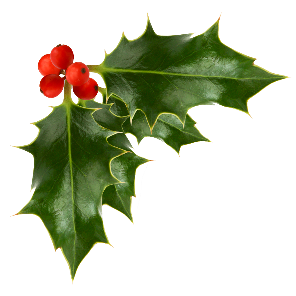 1000x1000 Holly Berries Transparent Background