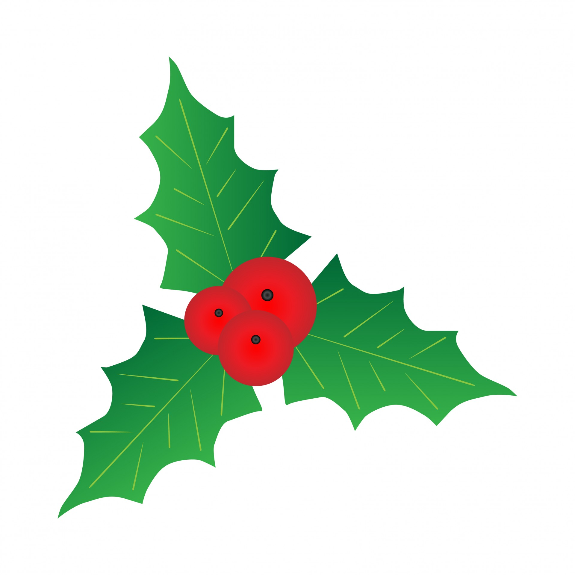 1920x1920 Holly With Berries Free Stock Photo