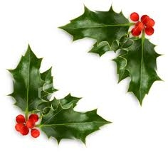 236x214 Holly Berries Are Poisonous True Or False