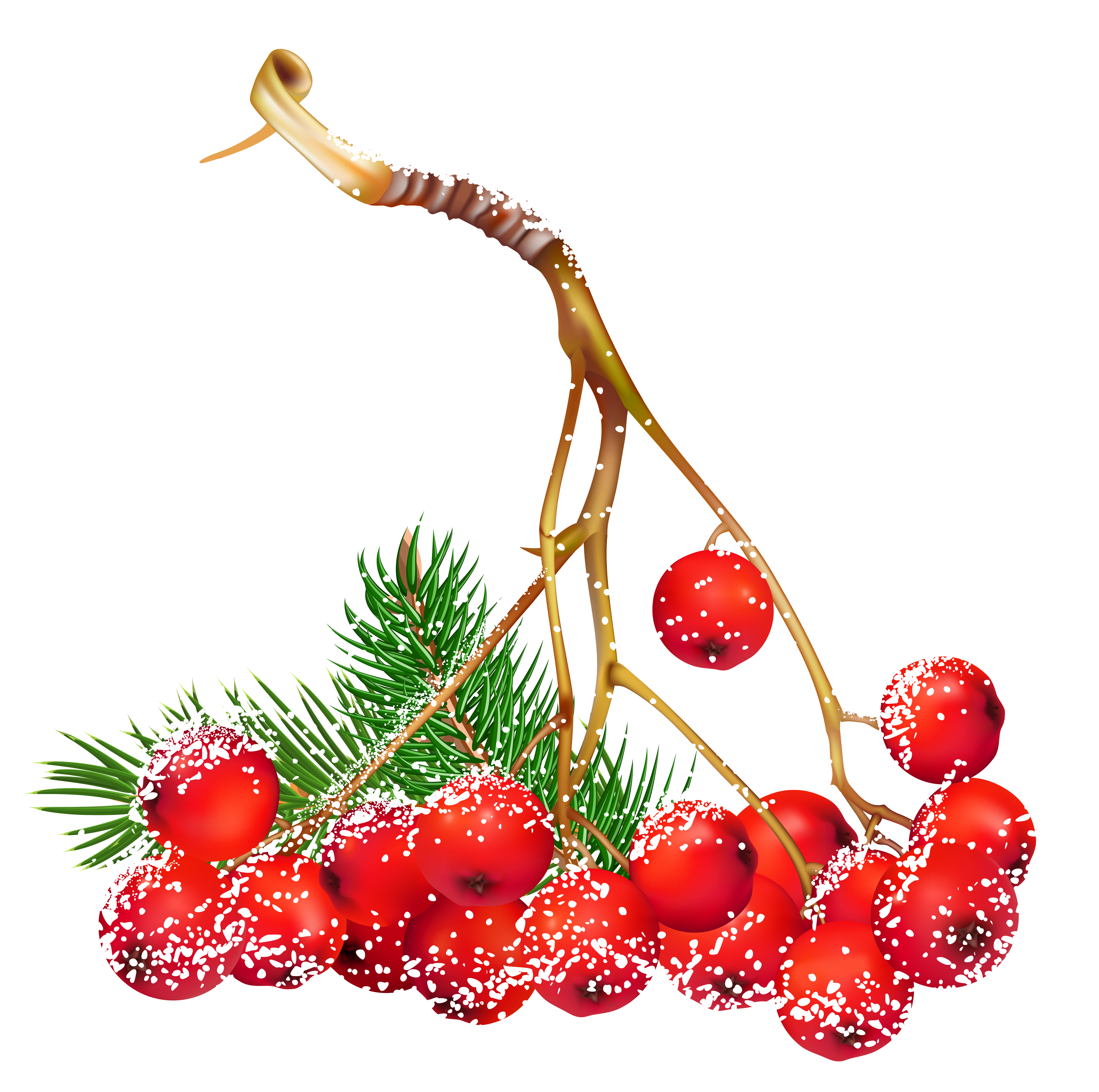 5132x5098 Transparent Christmas Snowy Holly Berries Png Clipart Art