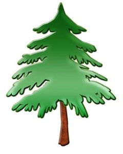 Picture Of Pine Tree