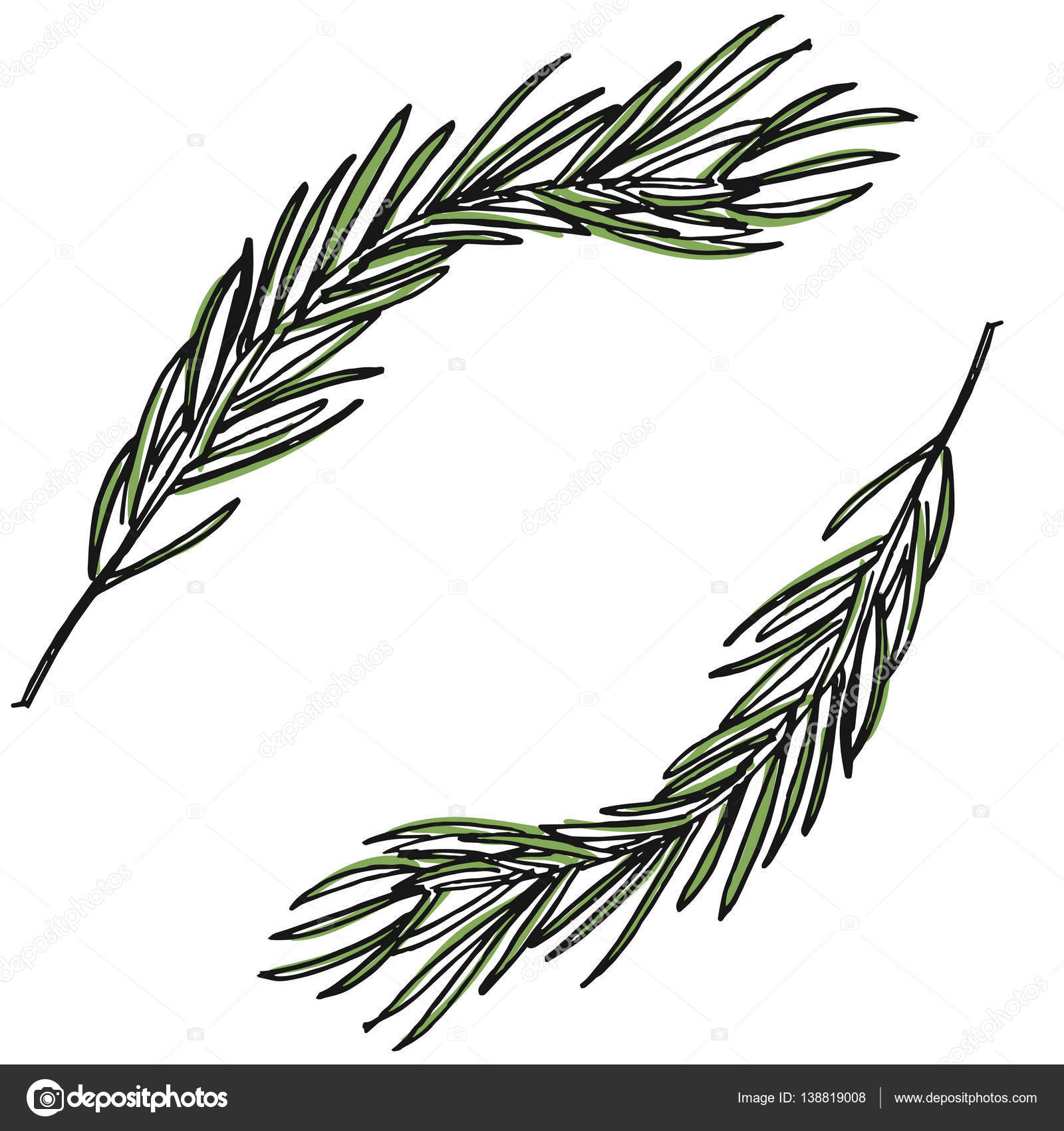 1600x1700 Botanical Illustration With Pine Branches, Pine Tree, Hand Drawn