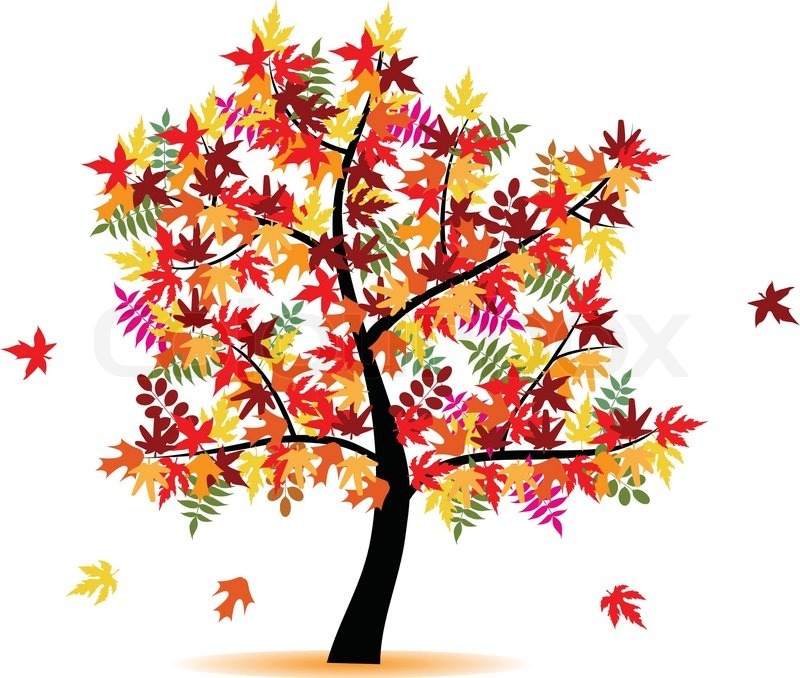 800x678 Four Season Tree With Colorful Leafs