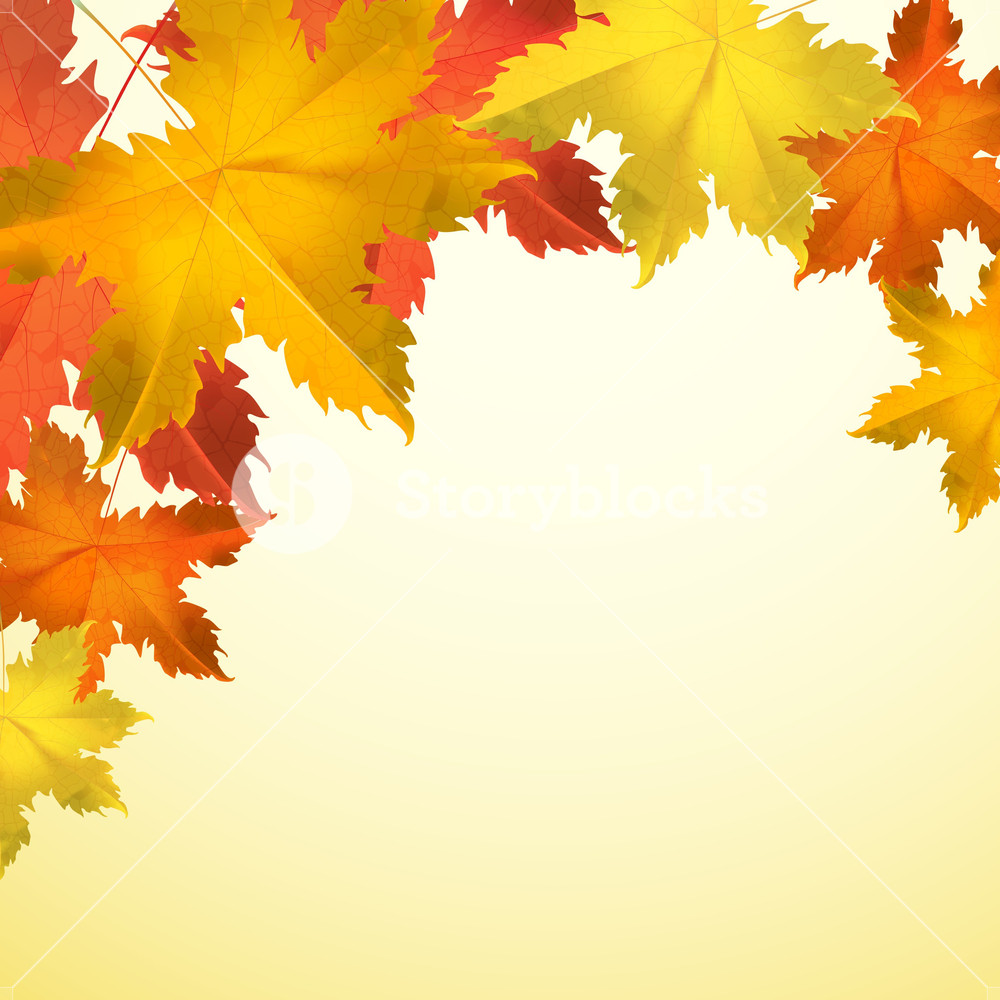 1000x1000 Maple Leaves On Abstract Background For Autumn Season Royalty Free