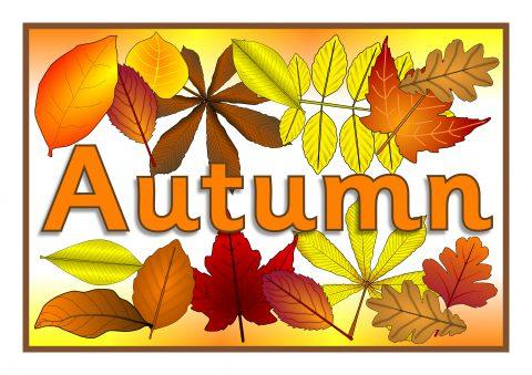 480x339 Autumn Season Primary Teaching Resources And Printables