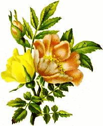 205x250 Bouquet Clip Art Download
