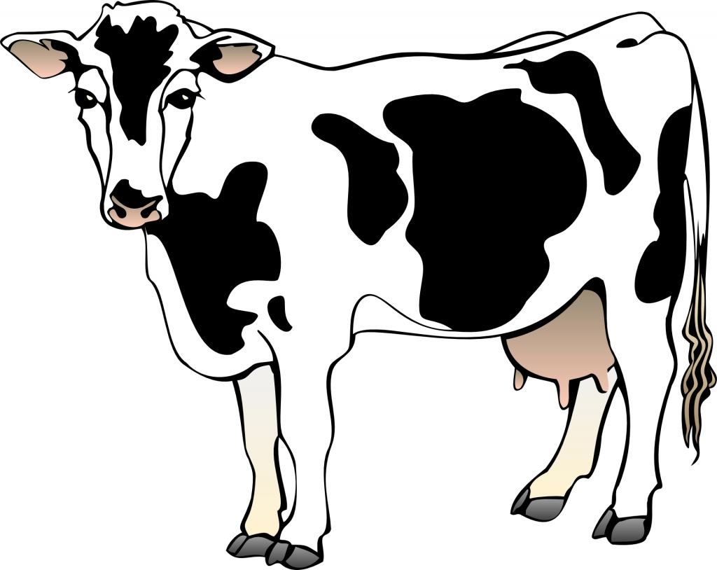 1024x814 Cartoon Drawing Of A Cow Cartoon Drawings Of Cows