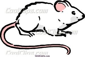 300x201 Cartoon mouse Vector Clip art
