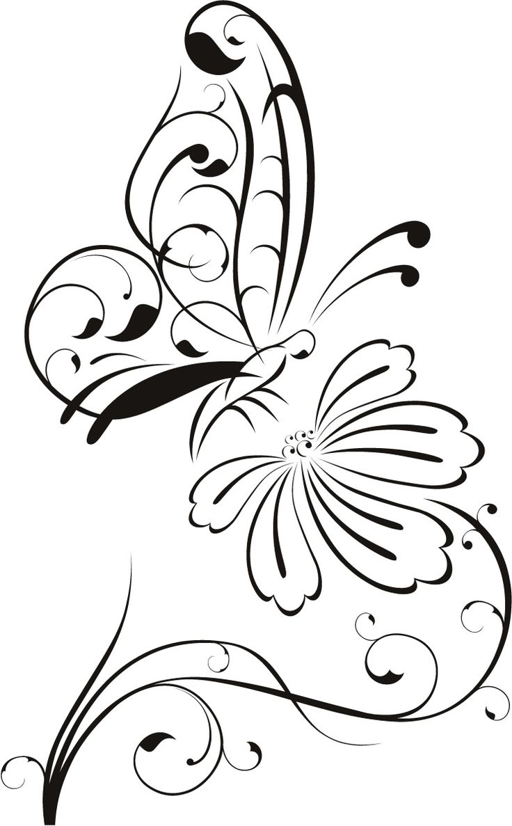 736x1187 Drawn Butterfly Real Flower
