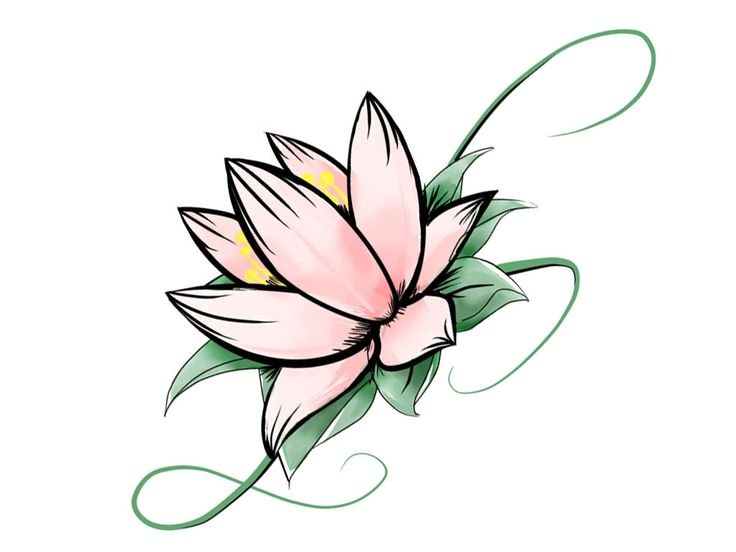 736x552 Flower Pictures Drawings. Good Flower Drawings With Flower