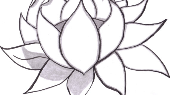 570x320 Pictures Of Drawing Flowers Best Ideas About Flower Drawings