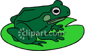 300x180 Frog On A Lily Pad
