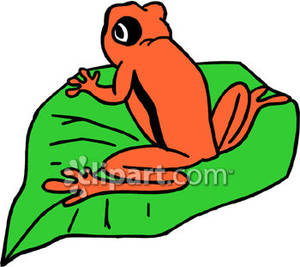 300x267 Orange Frog on a Lily Pad