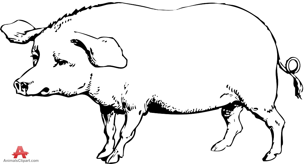 999x539 Drawing Pig Clipart Free Clipart Design Download