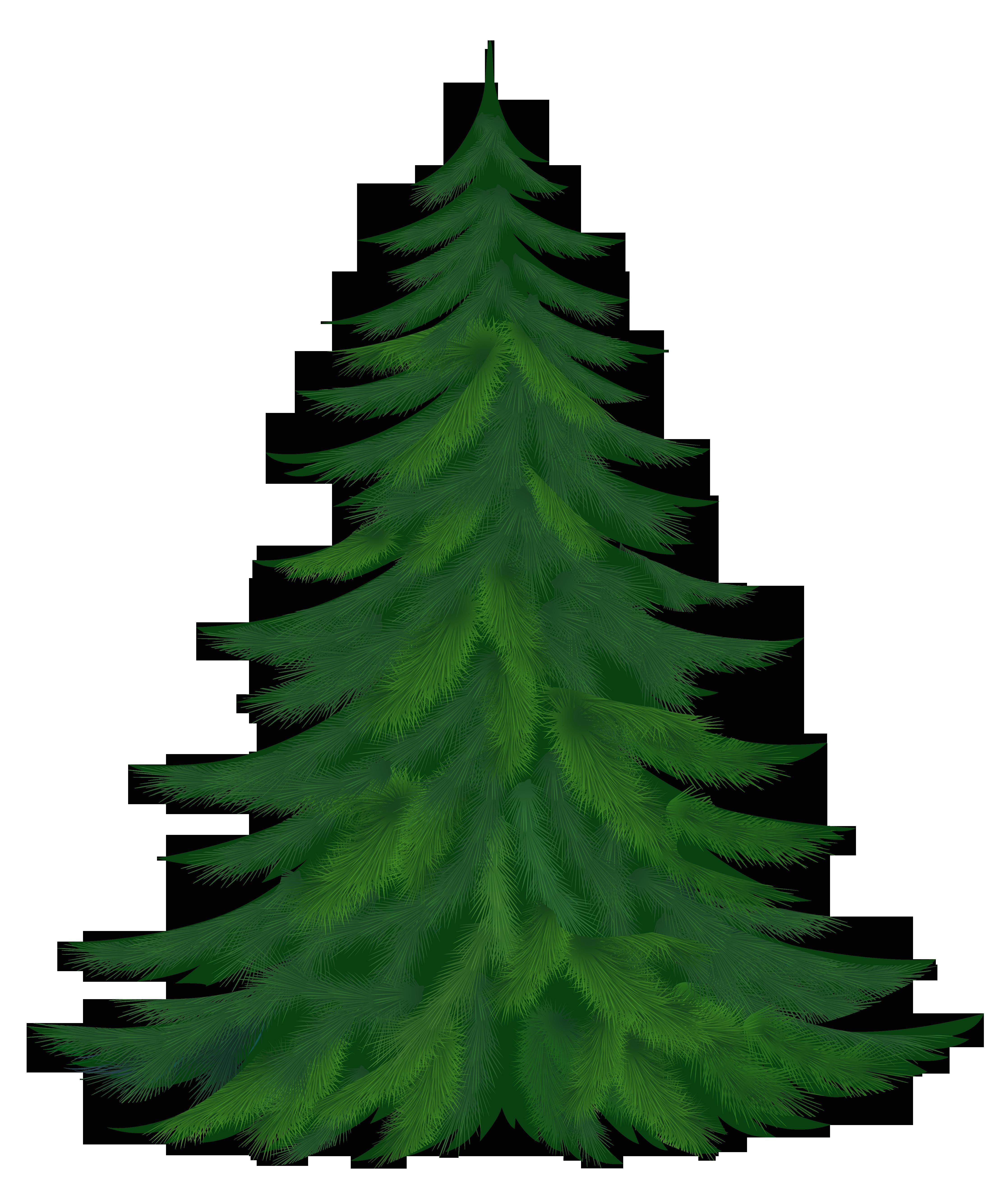 4469x5265 Pine Tree Clipart Three Pine