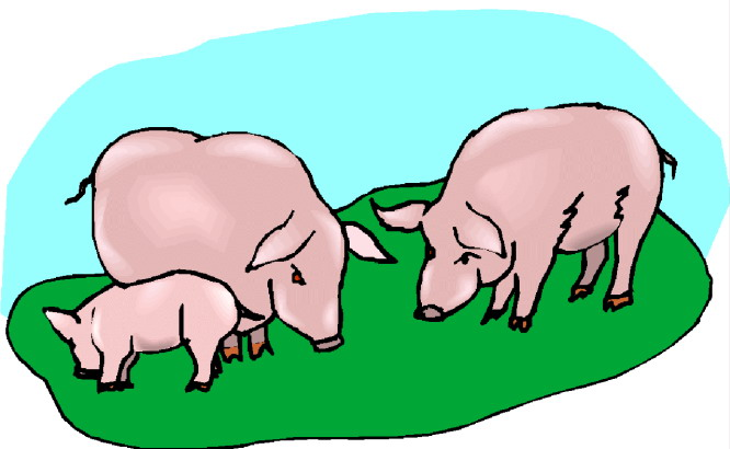 666x410 Pigs Clipart