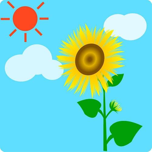 500x500 Best Planting Sunflower Seeds Ideas Growing