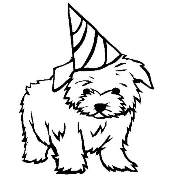 600x612 Puppy, Dandie Dinmont Terrier Puppy For Your Birthday Present