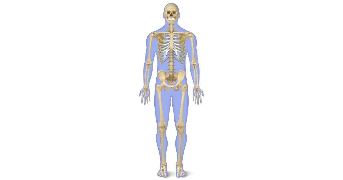 1200x630 Human Skeleton For Kids Human Body Skeleton Dk Find Out