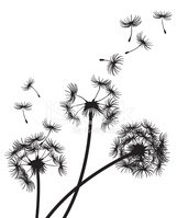 171x199 Dandelions Blowing In The Wind Stock Vectors