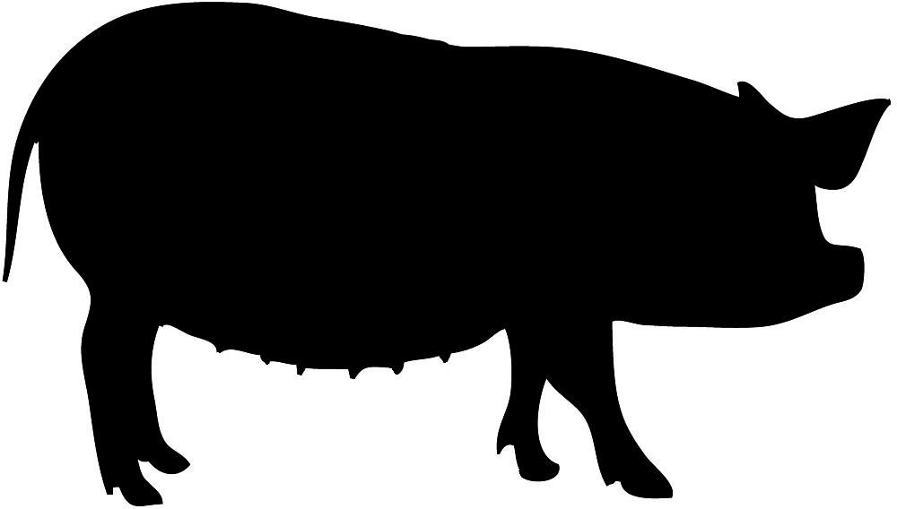 1000x568 Pork Clipart Big Pig
