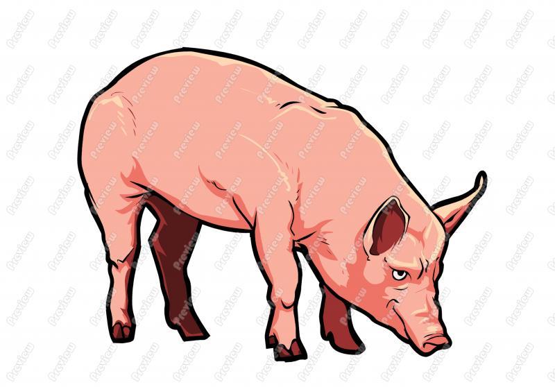 800x558 Realistic Pig Character Clip Art