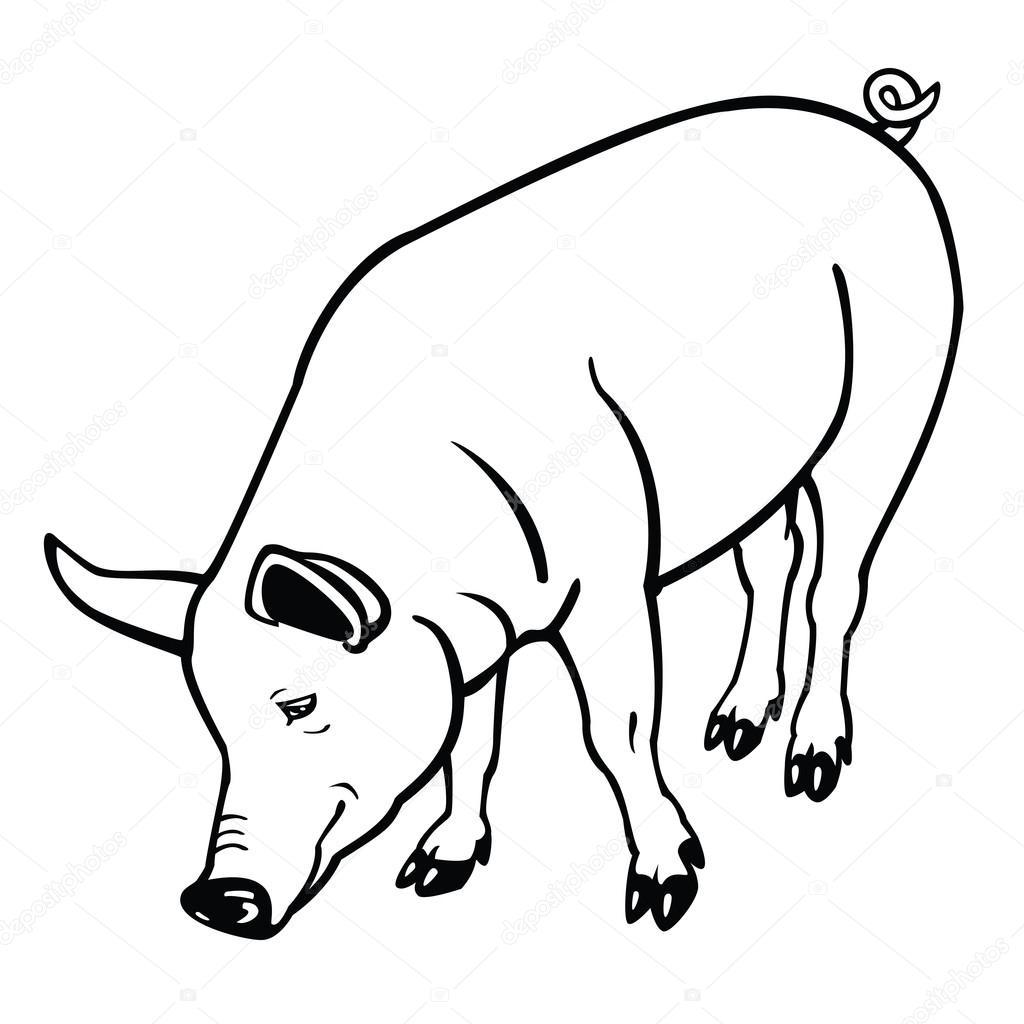 1024x1024 Pig Clipart Black And White Smiling Pig Black White Line Art