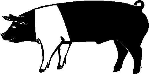 522x260 Hamphire Pig Outline Clipart
