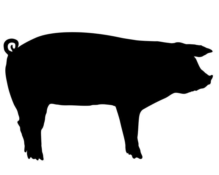736x588 Profile Clipart Pig